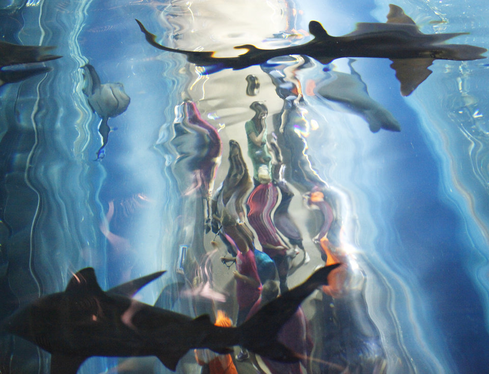 Photo - Sharks circle over people in a clear tunnel at feeding time at the  Oklahoma Aquarium in Jenks, Monday, May 3, 2010.        Photo by David McDaniel, The Oklahoman ORG XMIT: KOD