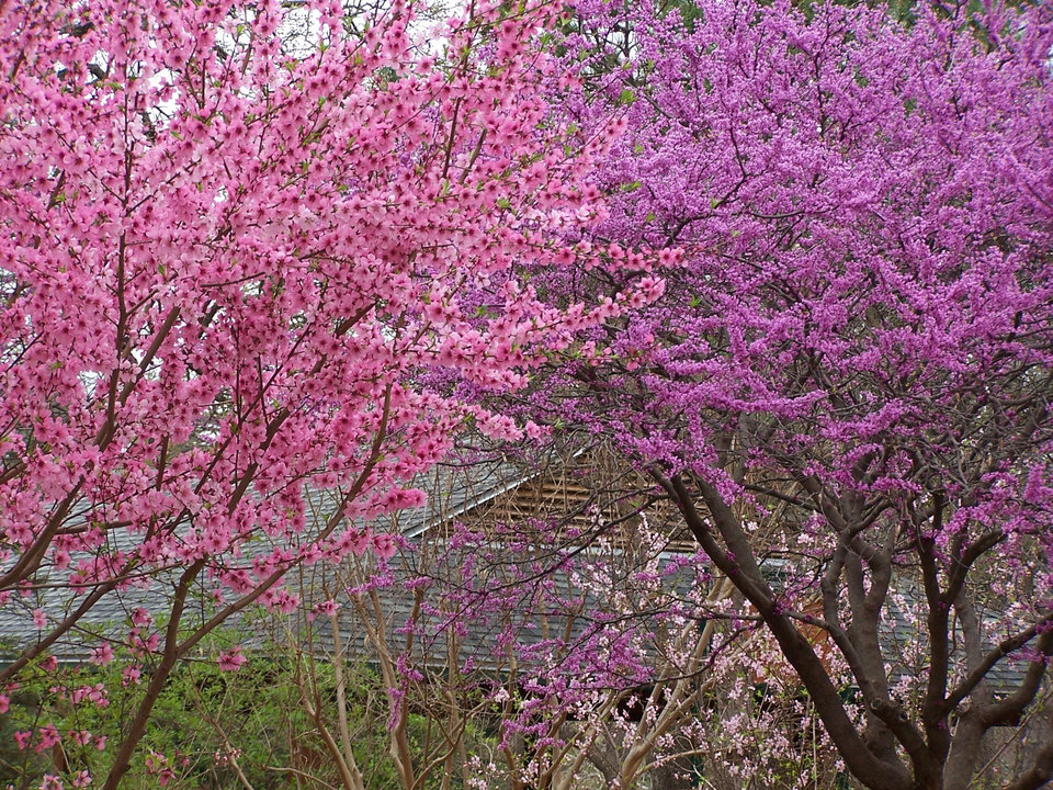 Spring color at Oklahoma City Zoo<br/><b>Community Photo By:</b> Cindi Tennison<br/><b>Submitted By:</b> Cindi , Bethany