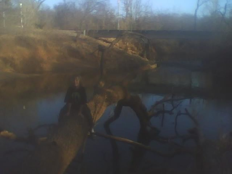 kash is at the creek crossing a tree and back.. the reflection is pretty.. neat photo.<br/><b>Community Photo By:</b> Tama<br/><b>Submitted By:</b> Tama, Midwest
