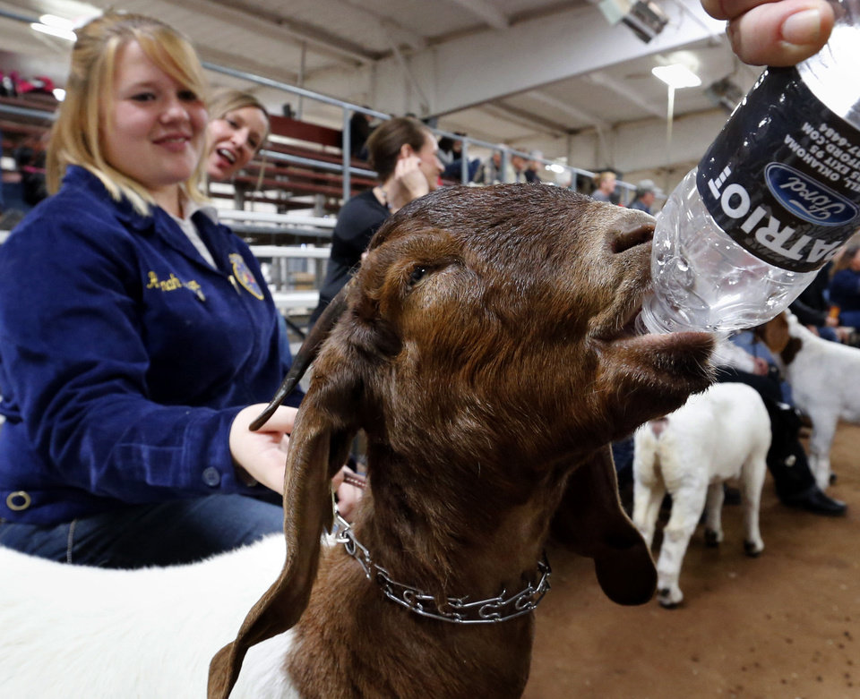 Photo - Hannah Meyer lets her boer goat get a drink of water Thursday at the  Cleveland County Junior Livestock Show.