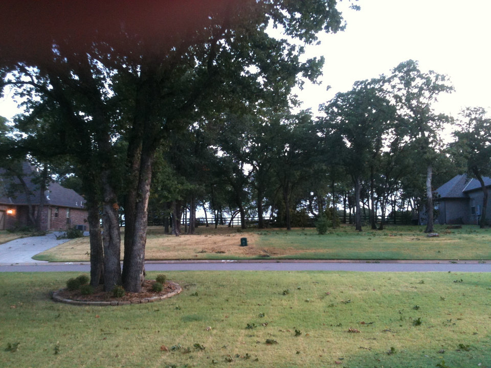 Huge trees dorm at 2408 crestview dr off post rd in Chitood farms behind lake Arcadia