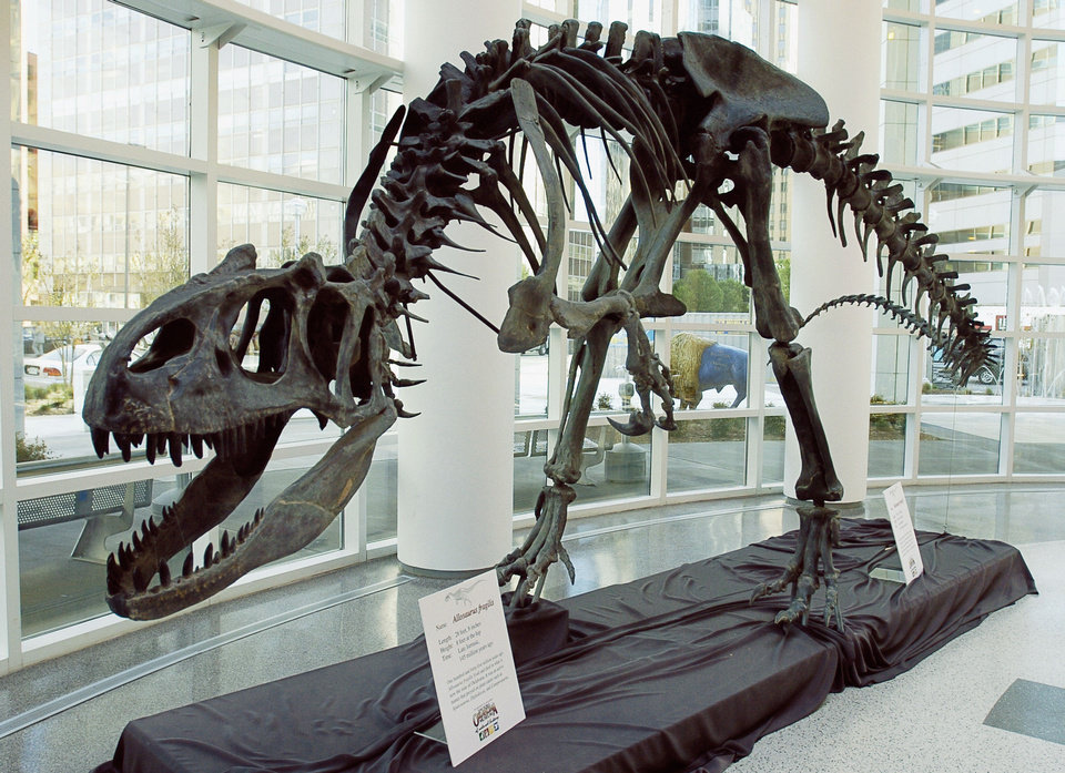 An East Central University professor found a dinosaur tooth during a recent dig in the Oklahoma Panhandle. The tooth belonged to a therapod, a broad category of large, meat-eating dinosaurs that included Allosaurus fragilis, shown here at the Sam Noble Oklahoma Museum of Natural History. OKLAHOMAN ARCHIVE PHOTO BY DAVID McDANIEL <strong>David McDaniel</strong>