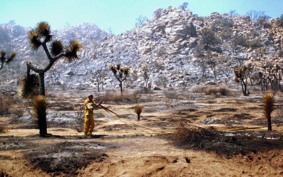 In a Monday, Aug. 13, 2012 photo, a CalFire firefighter lays a hose line amid scorched brush and Joshua trees as crews worked to contain the Quail Fire near Keys View Road in the in Joshua Tree National Park. Firefighters hope to have the blaze, which is in hard to reach rocky terrain, 90% contained by late Tuesday. AP photo