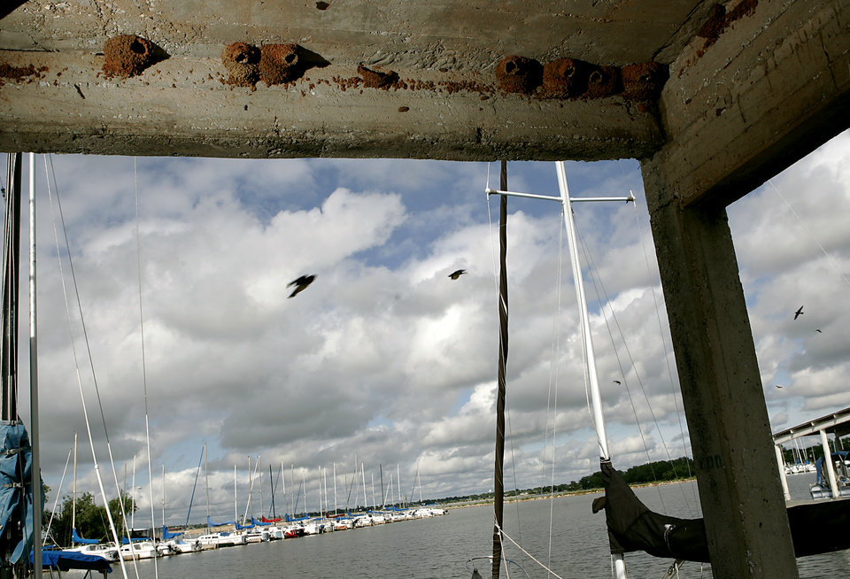 Photo - BIRD DEATHS: Adult mud swallows have started to rebuild their nests at Lake Hefner in Oklahoma City, on Monday, June 9, 2008. 186 birds were killed and one survived when a man knocked down their nests over the weekend. By John Clanton, The Oklahoman ORG XMIT: KOD