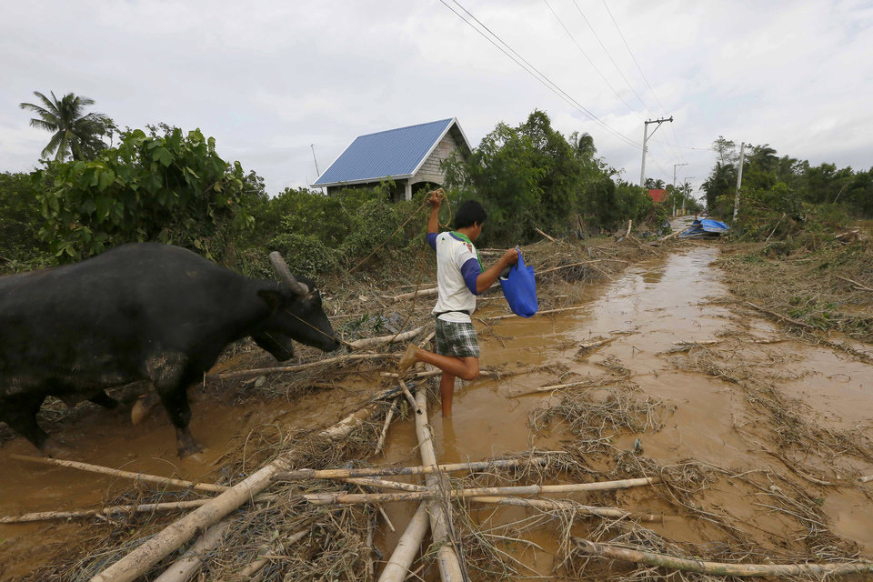 Photo - A man tends to his water buffalo amidst the debris that litter a road Tuesday, Oct. 20, 2015, two days after Typhoon Koppu battered Cabanatuan city and nearby provinces, northern Philippines. Slow-moving Typhoon Koppu blew ashore with fierce wind in the northeastern Philippines early Sunday, toppling trees and knocking out power and communications and forcing the evacuation of thousands of villagers. (AP Photo/Bullit Marquez)
