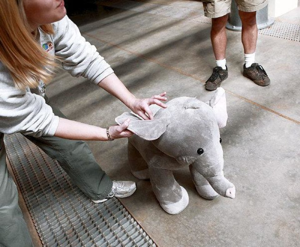 Photo - Jennifer Dagostino, Director of Veterinary Services at the Oklahoma City Zoo, jokes about Sammy, a stuffed animal that she and Nick Newby, Pachyderm Supervisor, use during drills with their staff while they prepare for Asha's birth. Photographed inside the new Elephant Exhibit at the Oklahoma City Zoo on April 5, 2011. Photo by John Clanton, The Oklahoman ORG XMIT: KOD
