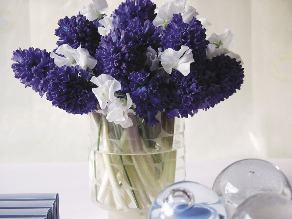 Photo - From the deep royal iris to the pale hydrangea, blues are said to be calming, representing serenity and openness. Lavender is the shade of femininity with darker purples conveying royalty. When combined, lavender and blue make a dramatic statement both visually and through scent. Hyacinths, for example, have a powerful fragrance some consider heady and intoxicating but that could be overwhelming to some. Photo provided by iBulb.     Evelyne Boogaert