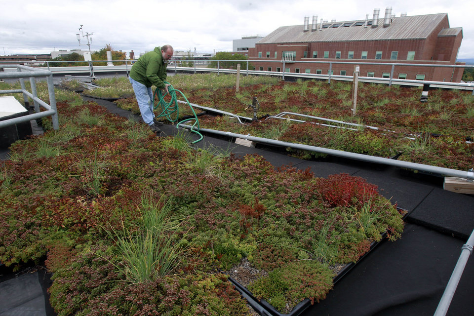 Photo - Carl Waite, of the University of Vermont research staff, works on the roof of the Aiken center on Monday, Sept. 23, 2013 in Burlington, Vt. The experimental green roof holds 870 flats of plant material covering 8,000 square feet, divided into eight experimental watersheds. The building that houses the Rubenstein School of Environment and Natural Resources is the first at UVM to receive a LEED, or Leadership in Energy & Environmental Design, platinum certification. (AP Photo/Toby Talbot)