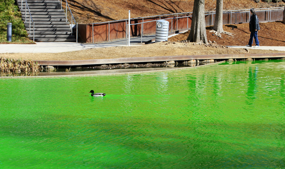 Photo - A visitor walking along a path as a duck swims in green water after a prankster treated the water system at the Myriad Botanical Gardens with green dye in Oklahoma City Monday, March 17, 2013. Photo by Paul B. Southerland, The Oklahoman