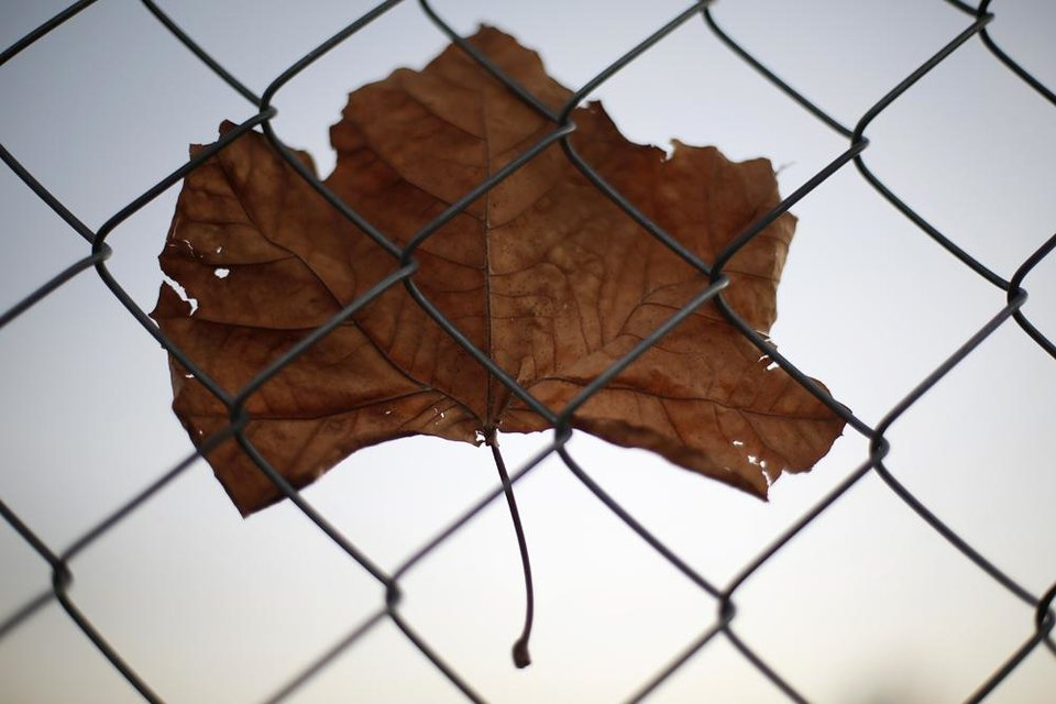 Photo -  A fall leaf is held up by the wind on a chain-linked fence at the University of Central Oklhaoma in Edmond, Okla., Friday, Nov. 9, 2012.  Photo by Garett Fisbeck, The Oklahoman