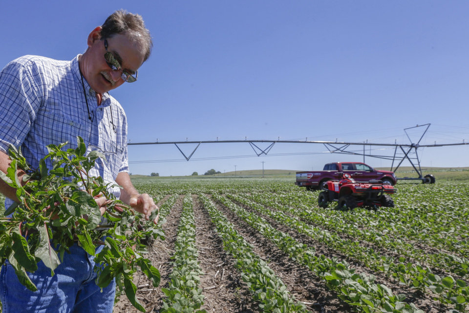 Photo - Jim Carlson pulls a pigweed plant from his field of soy beans in Silver Creek, north of Osceola, Neb. The route of the proposed Keystone XL pipeline runs through this field. AP PHOTO  Nati Harnik - AP