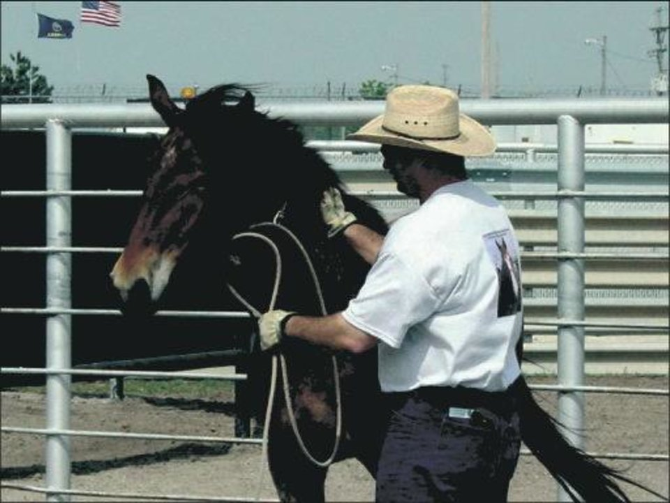 Photo - A wild horse stands warily as a prisoner at Hutchinson Correctional Facility pats the animal, one of the first steps in gentling horses. Some of the captured, trained mustangs are adopted by the U.S. Border Patrol to tighten security along the U.S.-Mexico border.  PHOTO PROVIDED BY HUTCHINSON CORRECTIONAL FACILITY