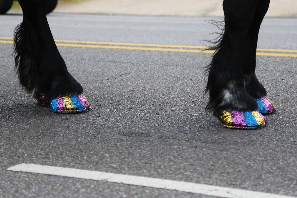 Photo - A horse has its hooves painted with multiple colors in the OKC Pride Parade on NW 39 in Oklahoma City, Sunday, June 26, 2016. Photo by Kurt Steiss, The Oklahoman