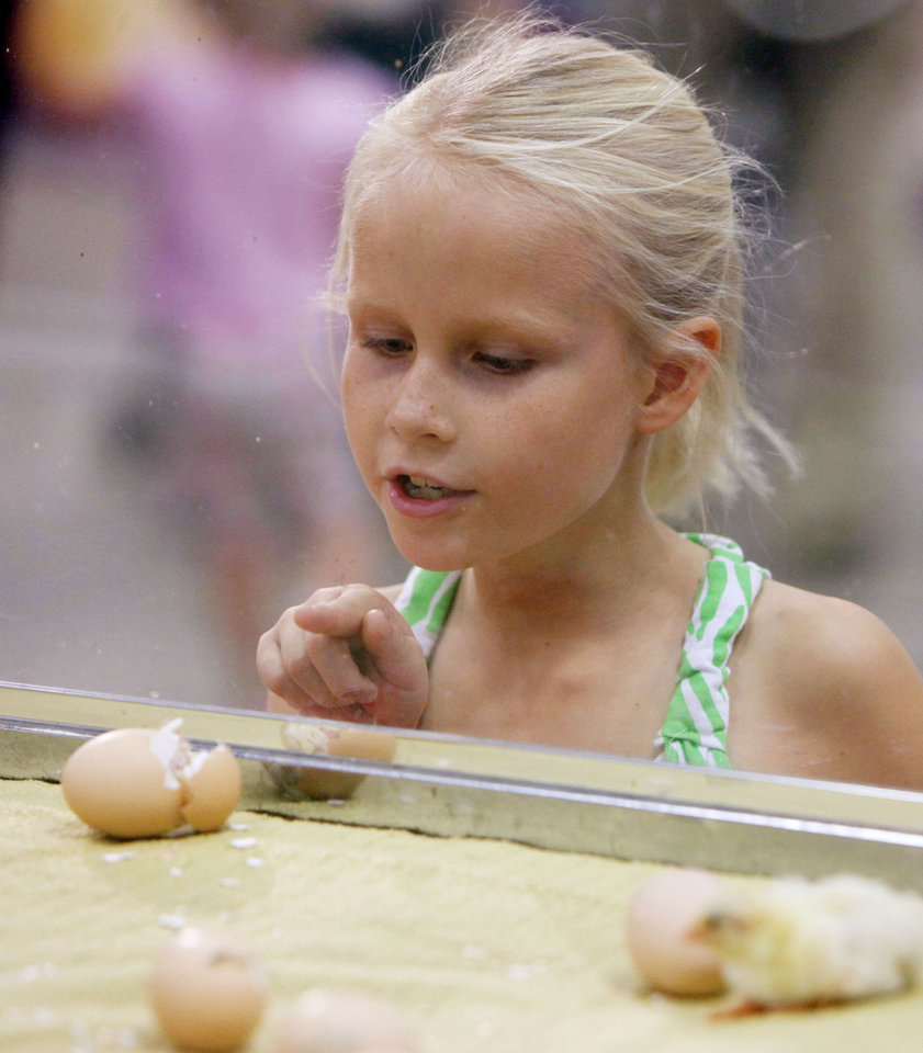 Eight year old Zoe Ross watches baby chicks hatch in the AGtropolis exhibit at the Oklahoma State Fair at State Fair Park in Oklahoma City, OK, Thursday, September 20, 2012,  By Paul Hellstern, The Oklahoman