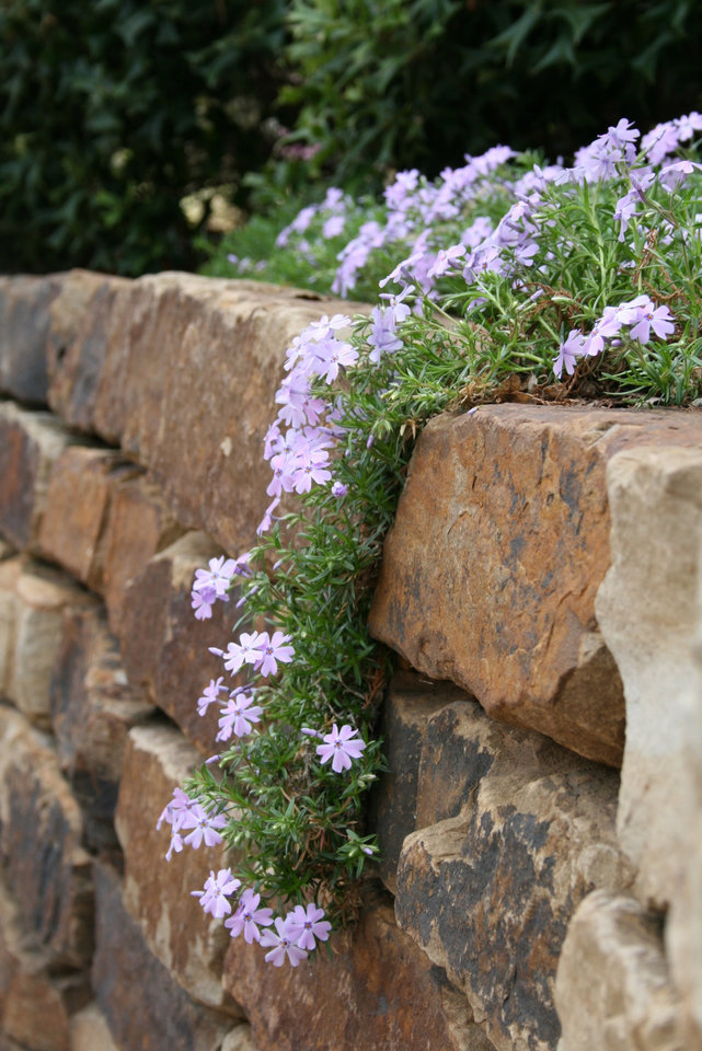 Flowers cascade over a wall in the Omniplex gardens.<br/><b>Community Photo By:</b> Cindi Tennison<br/><b>Submitted By:</b> Cindi , Bethany