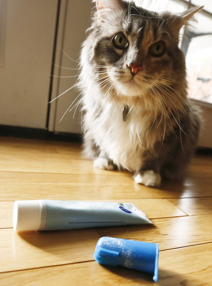 Photo - In this Thursday, Jan. 10, 2013 photo, a cat named Pepper sits near the toothpaste and brush after getting her teeth brushed at home, in Phoenix. Dogs and cats can't brush, spit, gargle or floss on their own. So owners who want to avoid bad pet breath will need to lend a hand. (AP Photo/Ross D. Franklin)