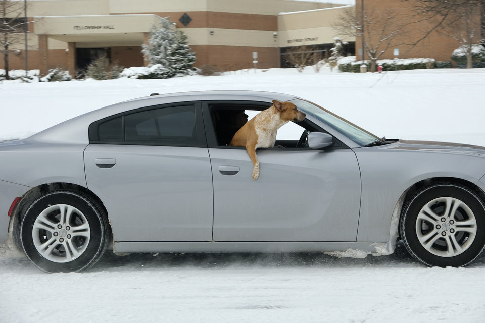 Photo - A dog hangs out the window of a car driving north on Bryant Ave. in Edmond Wednesday, February 17, 2021. [Doug Hoke/The Oklahoman]