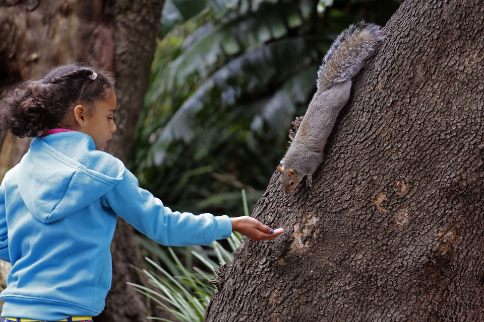 Photo - In this photo taken on Saturday, Aug. 23, 2014, a child holds out her hand to feed a squirrel in Company Garden, in the city of Cape Town, South Africa. The Company's Garden was started in 1652 by the Dutch East India Company, which supplied ships for the spice trade route via the Cape of Good Hope. You can also meet cute and curious squirrels, and feed them nuts from your hands. (AP Photo/Schalk van Zuydam)