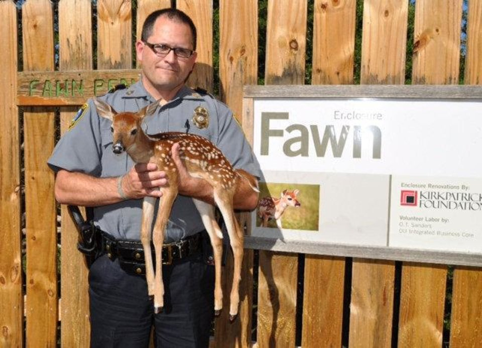 Photo - Oklahoma City police Master Sgt. Jeff Tanksley holds a fawn he rescued Sunday. Photo provided