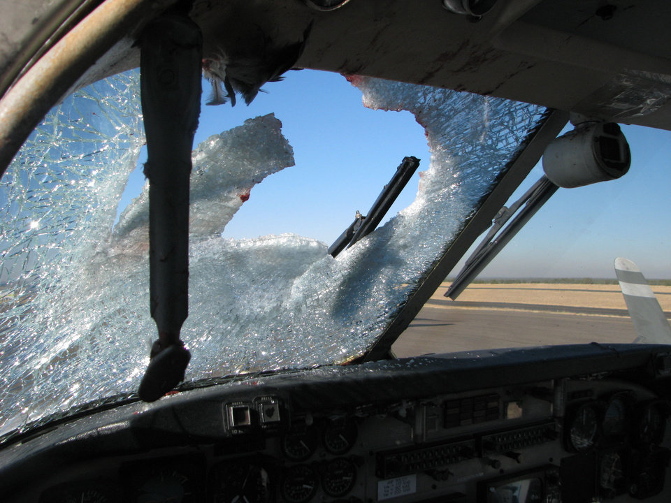 Photo -   This undated handout photo provided by the city of Show Low, Ariz., shows the windshield of this twin-engine Beechcraft C-99 turboprop was heavily splattered with blood and guts after striking a Western Grebe, a two-foot long water bird, at 11,000 feet over eastern Arizona on Nov. 4, 2009. Most bird strikes don't damage planes or force emergency landings. Ralph Paduano, a United Continental pilot who has flown for 26 years, said he's hit birds both on takeoff and on landing. (AP Photo/City of Show Low, Ariz.)