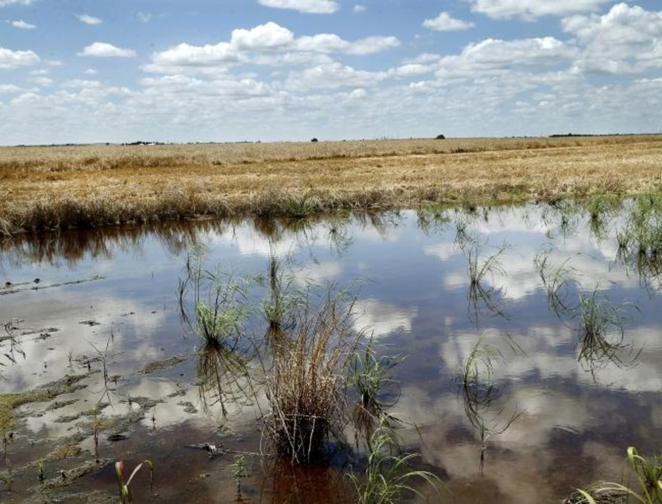 Photo - An expansive field of wheat can be seen beyond this pool of water resulting from rains the night before. Third-generation wheat farmer David VonTungeln walks through a soggy and rain-saturated field of wheat north of US 66 in Calumet on Wednesday, Jun. 19, 2019.  Persistent rains during May and June have stalled the wheat harvest schedule in Oklahoma and across the plains states.  VonTungeln said  harvest wold be finished by this time  in normal years. He said most wheat growers haven't even been able to get their combines out of the barn. In this field, crews attempted to begin harvesting this week, but quickly gave up after the weight of the combines created deep ruts, pushing the compacted dirt down, causing water below the surface to rise, much like stepping on a sponge. VonTungeln said an empty combine can weigh as much as 60,000 pounds before the weight of the harvested wheat is calculated into the weight.  [Jim Beckel/The Oklahoman]