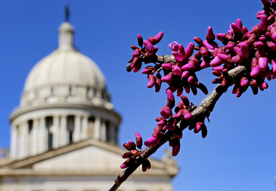 A redbud tree blooms outside the state Capitol in Oklahoma City on Tuesday, March 26, 2013. Photo by Bryan Terry, The Oklahoman
