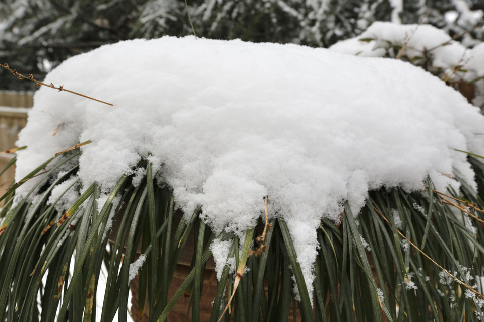 Photo - Snow stacks up on a potted plant after the year's first snowfall in Edmond, Okla. Friday, Jan. 6, 2017.  Photo by Paul Hellstern, The Oklahoman