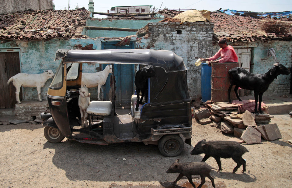 Photo -   In this May 10, 2012 photo, animals walk in and around an auto rickshaw in the neighborhood where Fatima Munshi lives in Khandwa, India. Living in Australia, Saroo Brierley, 30, was reunited with his biological mother, Munshi, in February 2012, 25 years after an ill-fated train ride left him an orphan on the streets of Calcutta. (AP Photo/Saurabh Das)