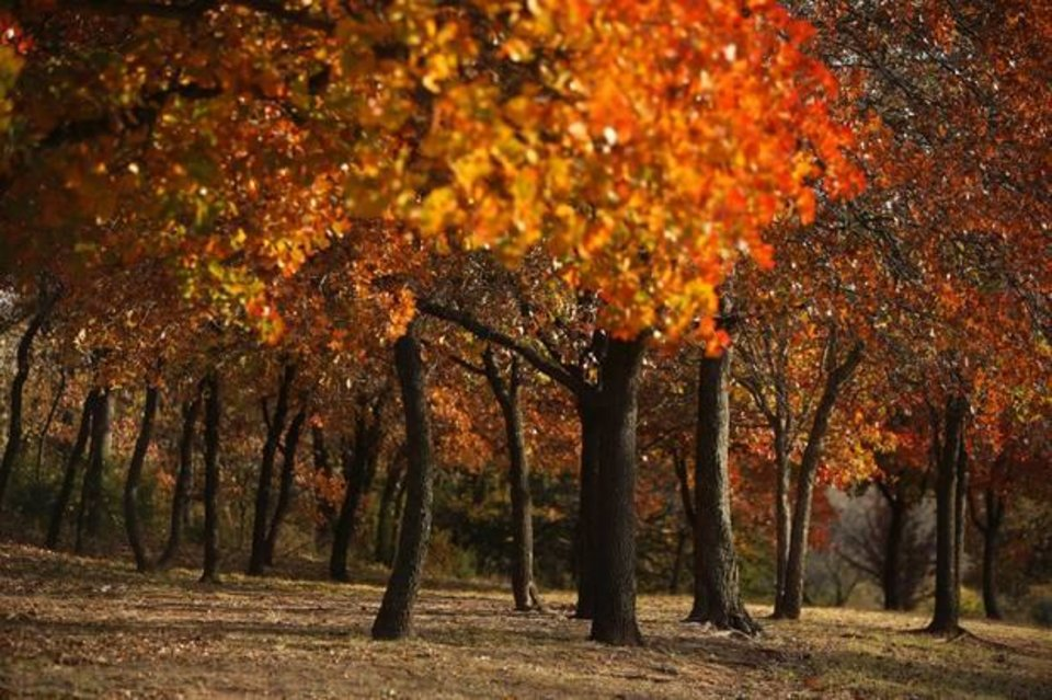 Photo - Later in fall, we will start to see scenes like this one captured in earlier years at Hafer Park in Edmond. Photo by Garett Fisbeck, The Oklahoman
