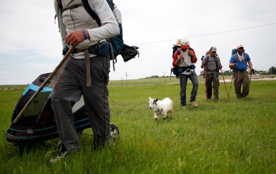 "Matt Gregory, P.J. Fisher, Phillip Aldrich and Blake Ferrell walk with Wrigley along Wilshire Road in Oklahoma City, Tuesday, Jan. 8, 2008. The groups is walking with a a goat to ""Crack the Curse"" of the Chicago Cubs and to raise money for Fred Hutchinson Cancer Research Center by walking 19,000 miles. Photo by Sarah Phipps, The Oklahoman."