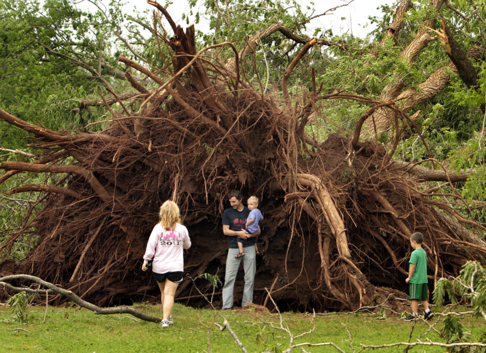 Photo - Zach Winters and son Leif, 3, stand next to an uprooted tree at Rotary Park blown over by Friday's tornado on Saturday, April 14, 2012, in Norman, Okla.  Photo by Steve Sisney, The Oklahoman