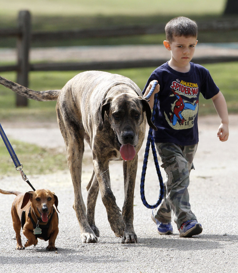"Four-year-old Levi Garrett walks his dogs ""Rusty"" (Great Dane) and Bentley (Dachshund) at Mineral Wells Park in Guthrie, OK, Friday, May 25, 2012,  By Paul Hellstern, The Oklahoman"