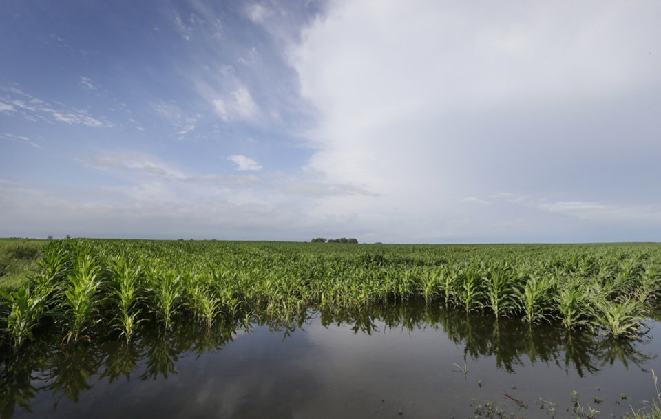 Photo - Corn plants sit in a flooded field farm field, Monday, June 30, 2014, near Dallas Center, Iowa. The U.S. Department of Agriculture, in a report released Monday, says farmers are planting the smallest corn crop since 2010 but as expected have planted the largest soybean crop on record. (AP Photo/Charlie Neibergall)