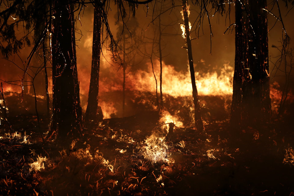 Photo - Trees burn in a burnout fire as firefighters continue to battle the Rim Fire near Yosemite National Park, Calif., on Sunday, Aug. 25, 2013. Fire crews are clearing brush and setting sprinklers to protect two groves of giant sequoias as a massive week-old wildfire rages along the remote northwest edge of Yosemite National Park. (AP Photo/Jae C. Hong)
