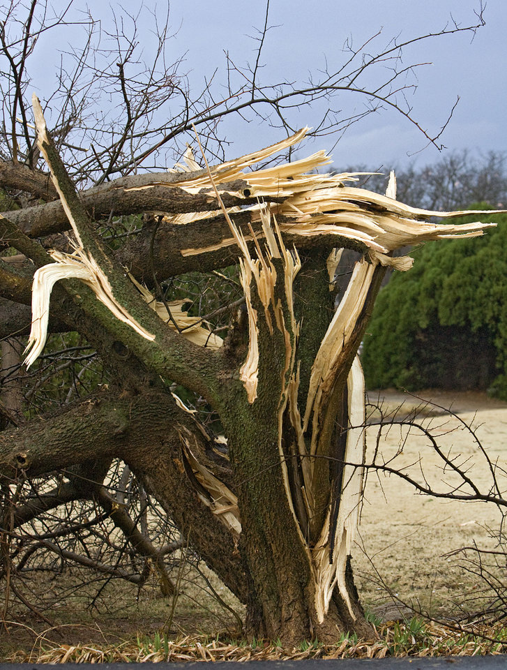 Photo - A damaged tree that was hit by the tornado that hit north Edmond on Tuesday, Feb. 10, 2009, in Edmond, Okla.  PHOTO BY CHRIS LANDSBERGER, THE OKLAHOMAN