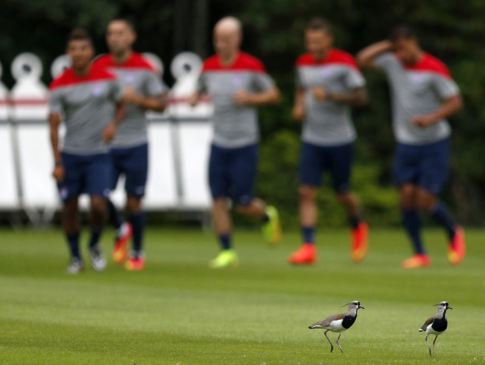 Photo - Birds run away as United States team players jog together during a training session at the Sao Paulo FC training center in Sao Paulo, Brazil, Monday, June 9, 2014. The U.S. will play in group G of the 2014 soccer World Cup. (AP Photo/Julio Cortez)