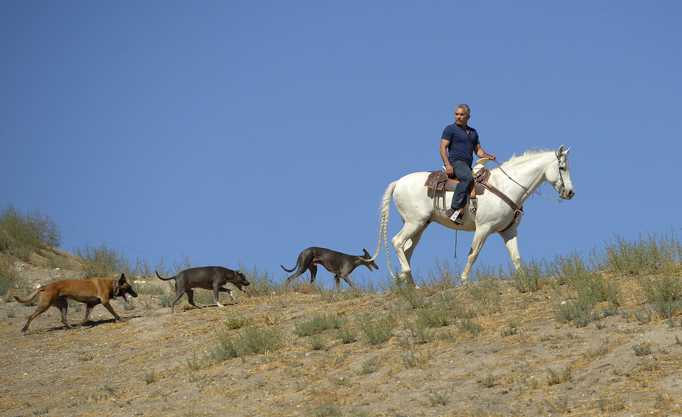 Photo -   In this Oct. 18, 2012 photo, Cesar Millan rides his horse Conquistador as he walks with his dogs at his Dog Psychology Center, in Santa Clarita, Calif. Millan has a new television show, book, tour and documentary.