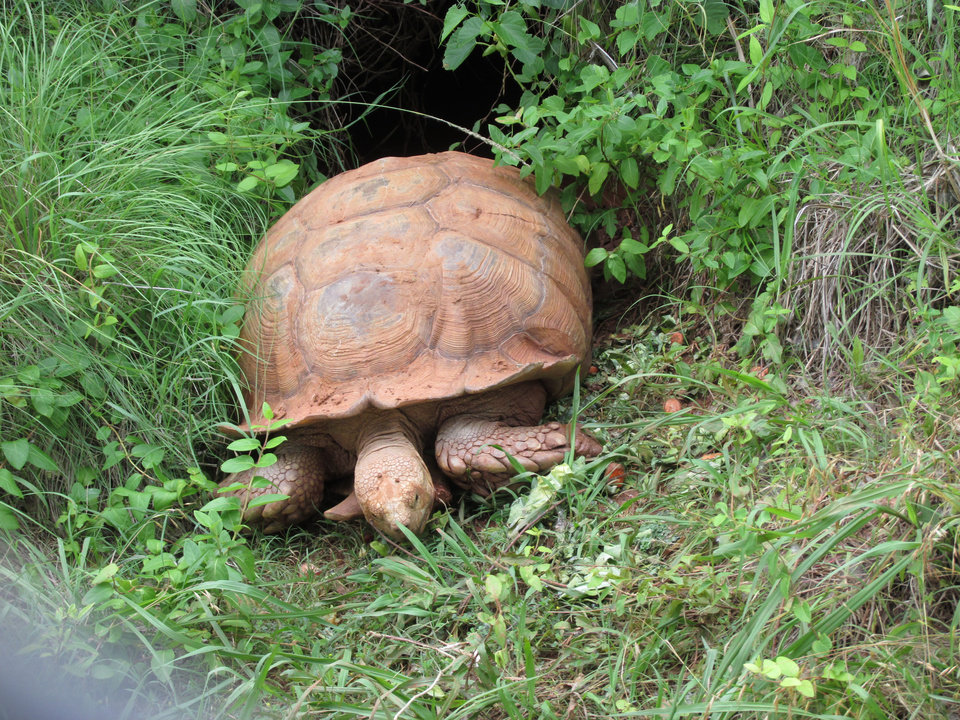 Turtle at the OKC ZOO 2014 - Photo by Yvonne Minter