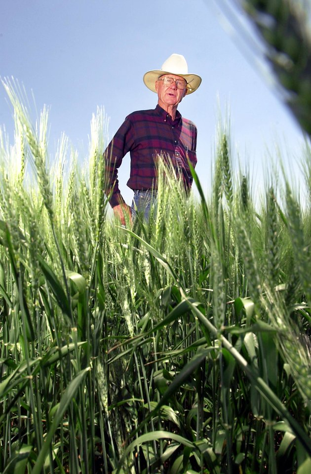 Photo - Farmer Bart Brorsen examines his wheat near Perry in 2001. Brorsen on Wednesday talked about his  longtime friend, the late Henry Bellmon.  PHOTO BY DAVID MCDANIEL, THE OKLAHOMAN