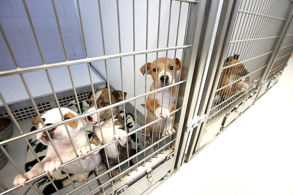 Photo - Puppies at the Homeward Bound quarantine center, Tuesday, December 18, 2012.  For a story about OKC Humane Society adoptions being up this year Photo By David McDaniel/The Oklahoman