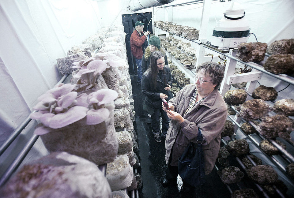 Kansas resident Cheryl Adelhardt takes photos of mushrooms growing on shelves inside a semitrailer in Edmond. Oklahoma Mushroom provided tours of the farm Saturday. Photos by PAUL HELLSTERN, The Oklahoman
