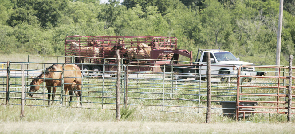 A trailer takes horses seized from a farm in Pauls Valley to be evaluated earlier this month. Photo by Jaconna Aguirre, The Oklahoman