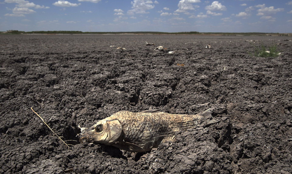 Photo - FILE - In this Aug. 3, 2011 file photo, the remains of a carp is seen on the lake dried out lake bed of O.C. Fisher Lake in San Angelo, Texas.  Global warming is rapidly turning America into a stormy and dangerous place, with rising seas and disasters upending lives from flood-stricken Florida to the wildfire-ravaged West, according to a new U.S. federal scientific report released Tuesday, May 6, 2014.  (AP Photo/Tony Gutierrez)