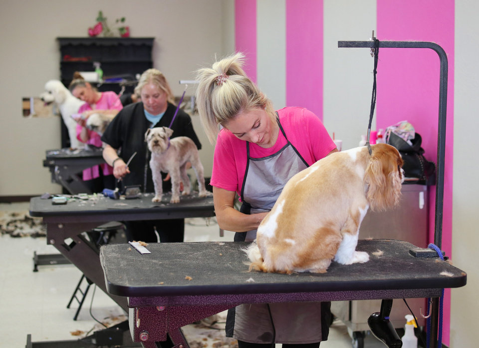 Photo - Bark on Main Pet Salon owner Erika Puckett trims a dog in her Norman location, Friday, May 1, 2020. [Doug Hoke/The Oklahoman]