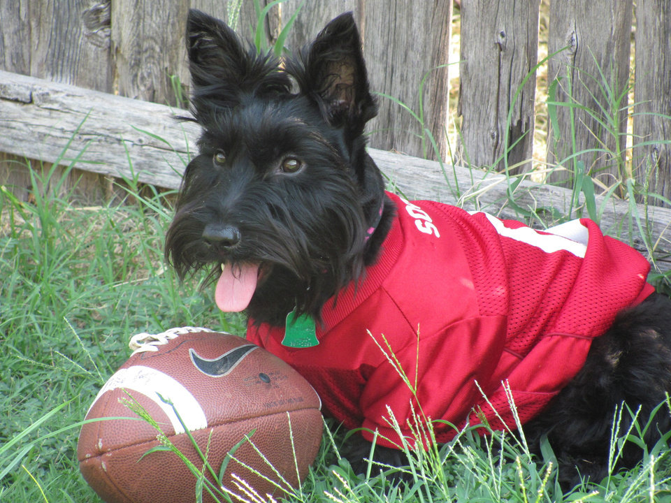 Photo - Olivia is ready for the game! Boomer Sooner!!!