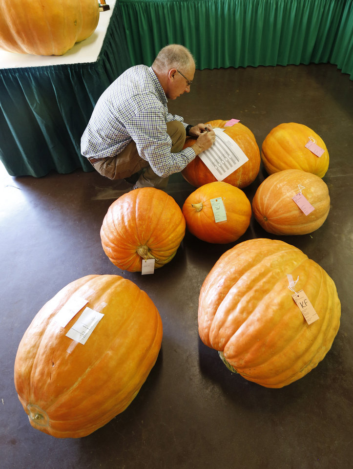 Photo - Lynn Brandenberger records the weights of pumpkins in the Creative Arts building Wednesday at State Fair Park in Oklahoma City. The Oklahoma State Fair starts Thursday. Photo By Steve Gooch, The Oklahoman  Steve Gooch - The Oklahoman