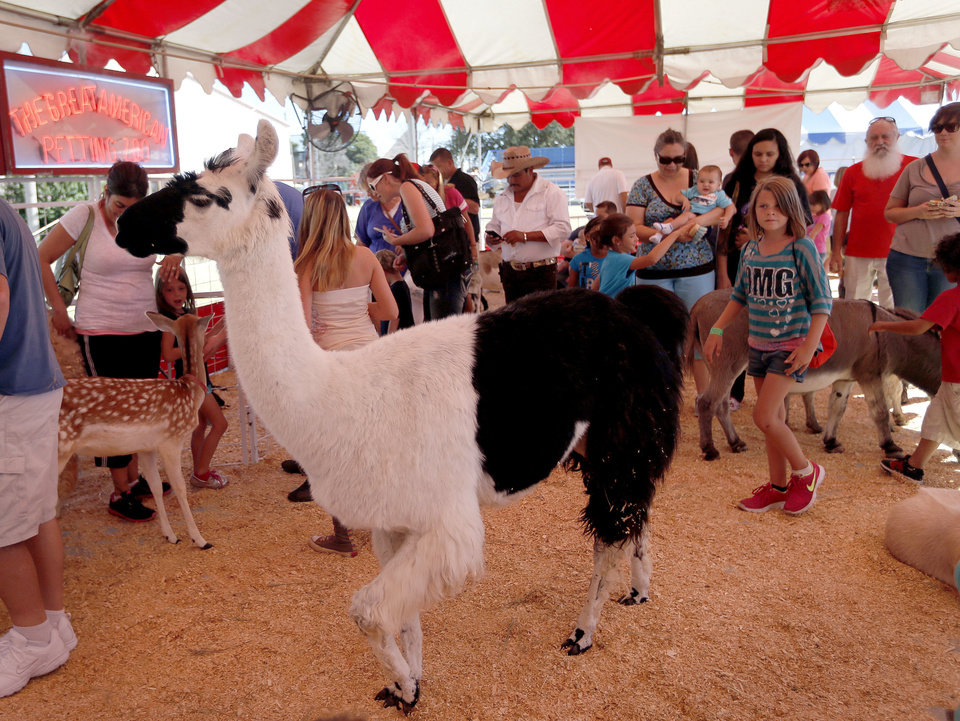 Photo - A llama walks through the great American Petting Zoo during the last day of the Oklahoma State Fair in Oklahoma City, Sunday, Sept. 22, 2013. Photo by Sarah Phipps, The Oklahoman