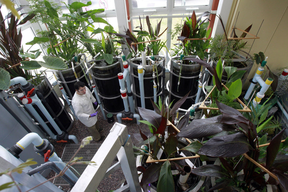 Photo - Matthew Beam works in the eco-machine, a natural wastewater treatment system that resembles and mimics a wetlands, in the Aiken center on Monday, Sept. 23, 2013, in Burlington, Vt. The system is  exceeding the state's water quality standards for waste water treatment. The building that houses the Rubenstein School of Environment and Natural Resources is the first at UVM to receive a LEED, or Leadership in Energy & Environmental Design, platinum certification. (AP Photo/Toby Talbot)