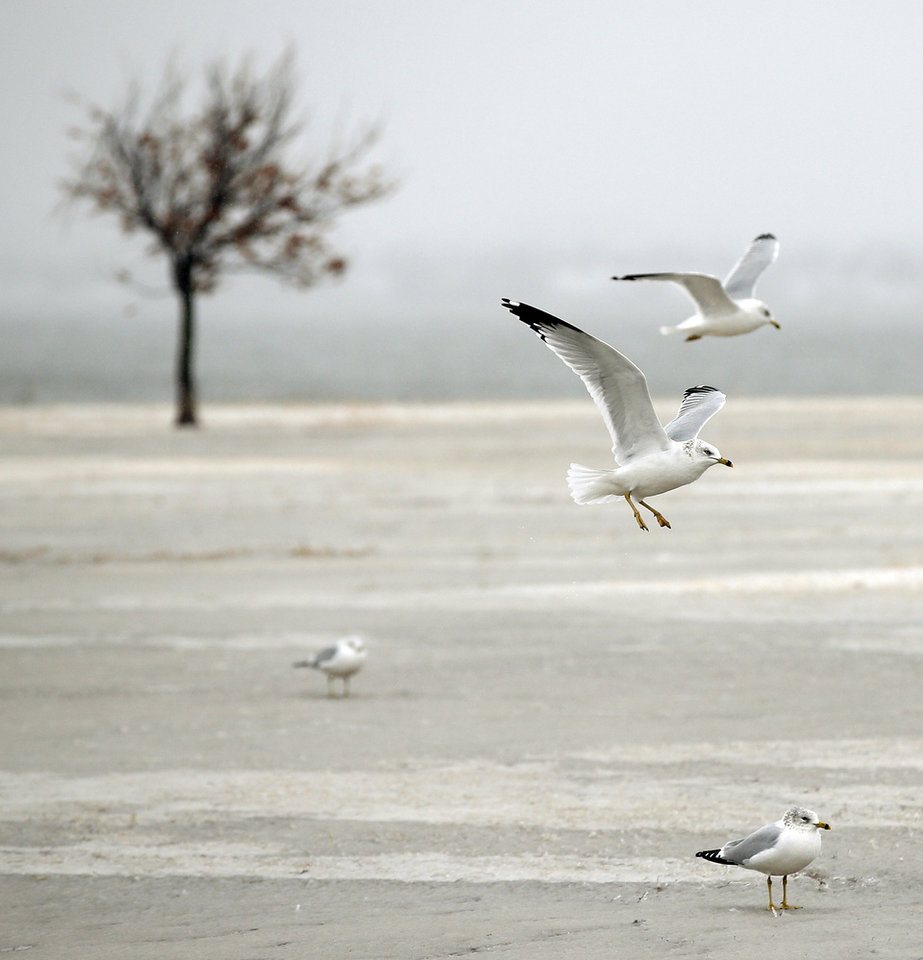Photo - Birds at Lake Hefner during winter weather in Oklahoma City, Sunday, Dec. 27, 2015. Photo by Nate Billings, The Oklahoman