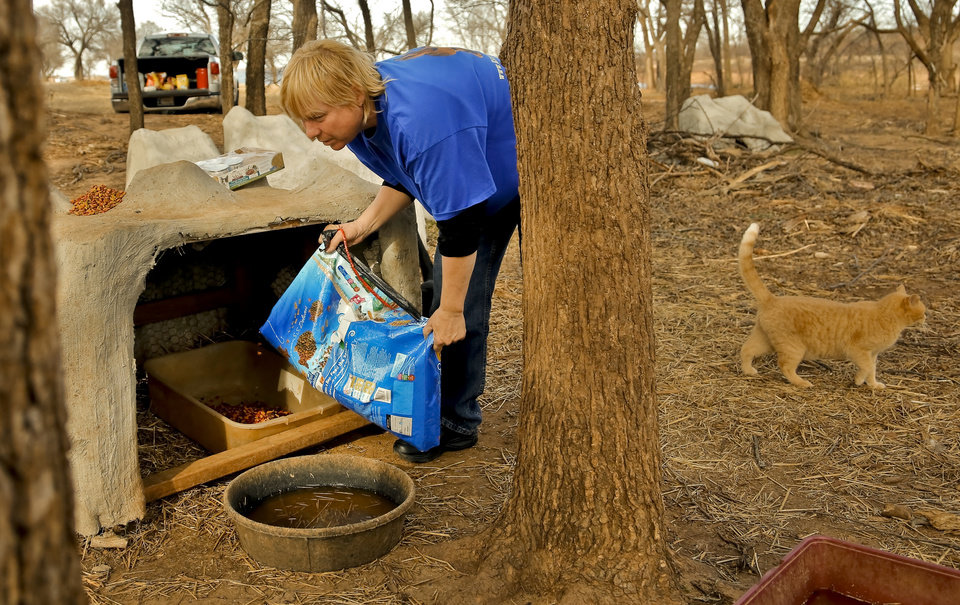 Photo -  Jay Cook, who runs the nonprofit Kitty Wranglers, feeds and waters the feral cats that live around Lake Hefner in Oklahoma City on Jan. 28. Due to the removal of cedar trees in the area the habitat and living area for the feral cats has been destroyed leaving them exposed to the elements. Cook tends to the cats seven day a week, and is trying to reduce the population by spay and neutering the cats. Photo by Chris Landsberger, The Oklahoman   CHRIS LANDSBERGER -  CHRIS LANDSBERGER